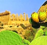 Un tour del gusto in Sicilia