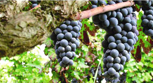 Nature, Messapian heritage and wine culture